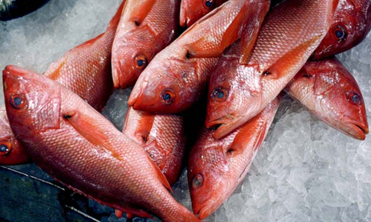 arditor fish intake may increase diabetes risk