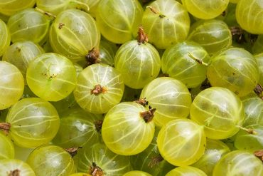 blood sugar control tip - amla