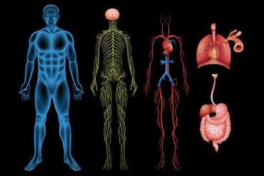 autonomic neuropathy in diabetes