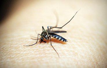 dengue fever symptoms